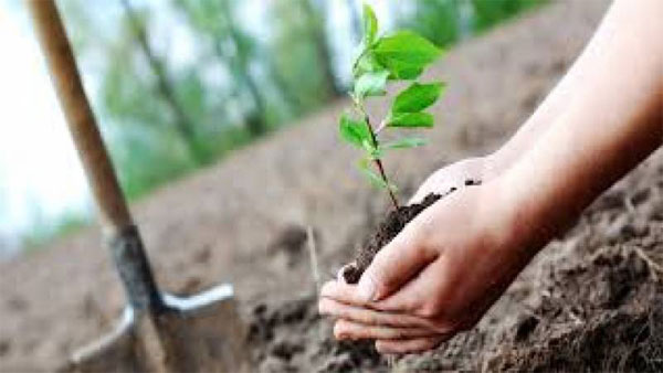 Railways plant 18,000 saplings under spring tree plantation drive
