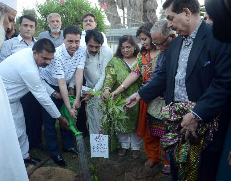 DG KDA opens tree plantation drive